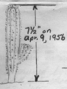 A boy's cactus sketch