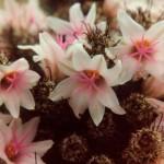 Flowers in 1982