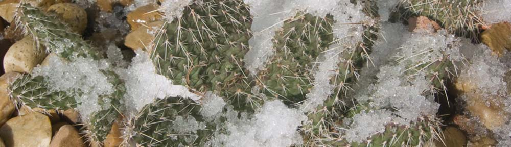 Cactus and Succulent Society of Alberta
